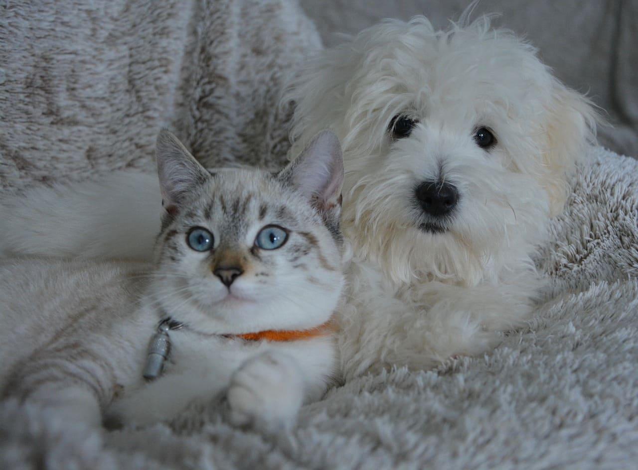kæledyr i et moderne hjem